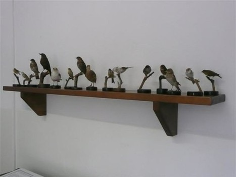 Image relating to Civic Museum of Ornithology and Natural Sciences #1