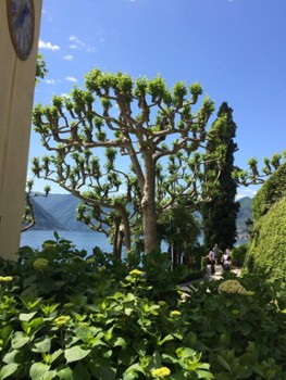 Image relating to Villa del Balbianello #23