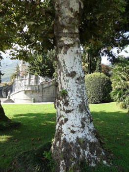 Image relating to Teresio Olivelli Park #8