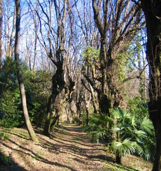 Image relating to Villa Carcano Park #6